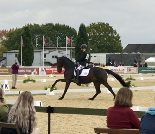 Waverley Dante crowned 4yr old National Champion