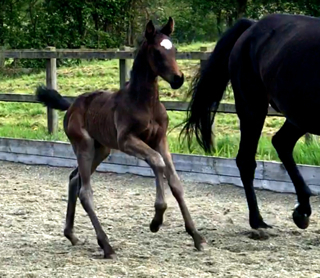 A Foundation colt for Lady Sun
